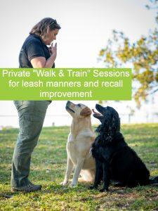 dog training and walking wollongong