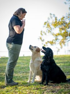 private dog training and walking wollongong