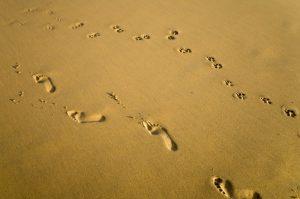 recommended dog walker illawarra